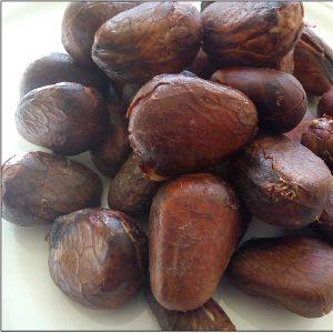Breadnut